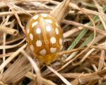 Ladybird 19 spot