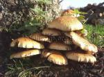 Fungi Fungi growing at the base of a tree in farmland
