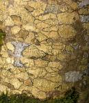 Crazy paving? Close up of tree bark
