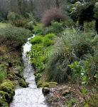 Woodland stream Stream in Trengwainton gardens, Cornwall